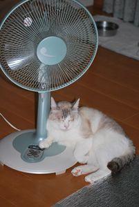 扇風機が好き