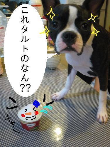カキ氷4(sinn)