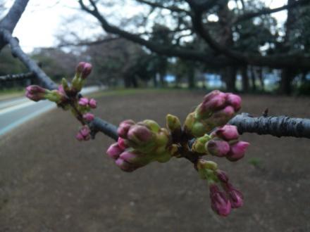 spring-flowers4.jpg