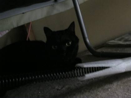 ロックちゃん、ベッドの下-1