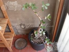 blog_20090901_9063_011