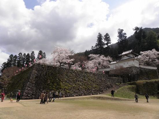 出石城跡の桜