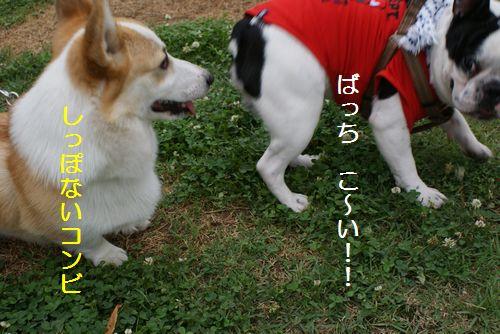 ココアちゃん2