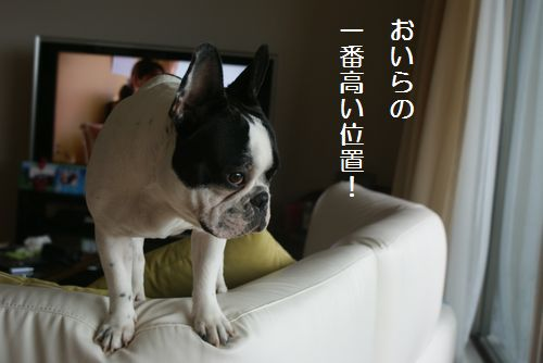 ソファーの上1
