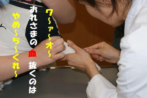 DSC01101-1.jpg