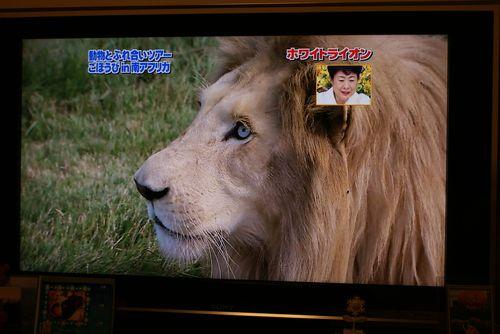 TV24.jpg