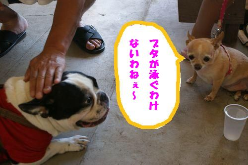 chiwawa2.jpg