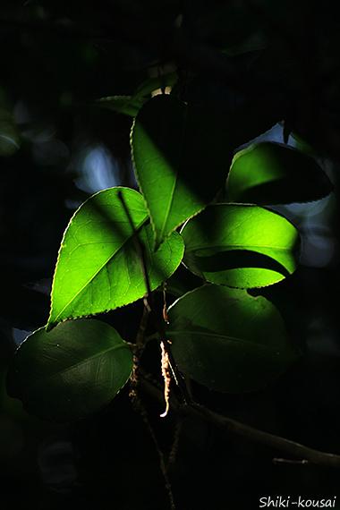木漏れ日・透過光
