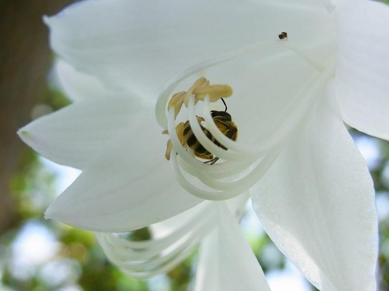 ハチ、その1。