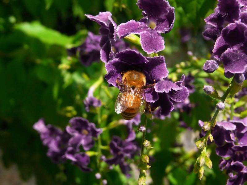 ハチ、その2。