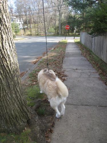 トビ男3日散歩