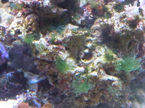 藻の繁殖状況20110730_01