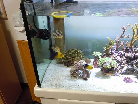 プチ魚群20110808
