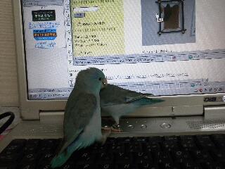 PCの中の。