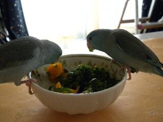 朝のサラダ?