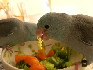 小松菜を。