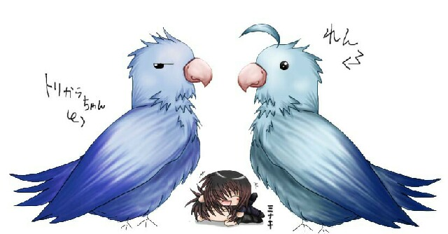 鳥インコダブルズ