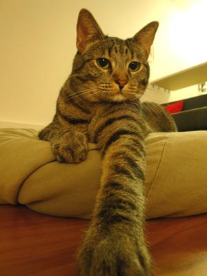 cat7_16_2009