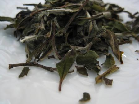 白牡丹 茶泉