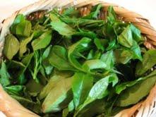 salad 021
