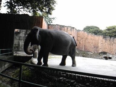 manila zoo1