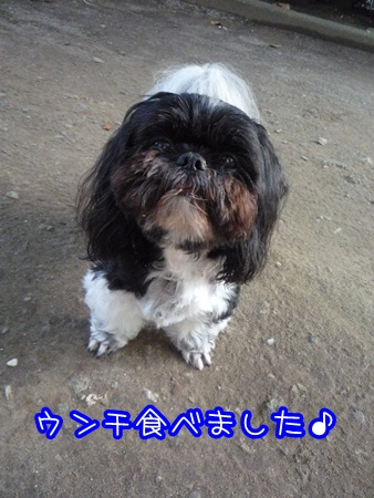P1120518_20090806190925.jpg