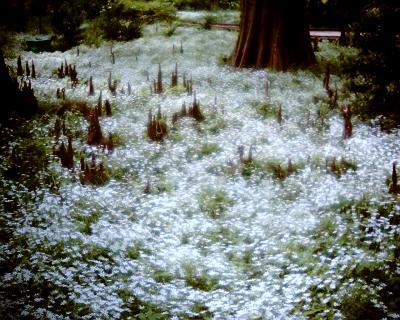 白い絨毯:Entry