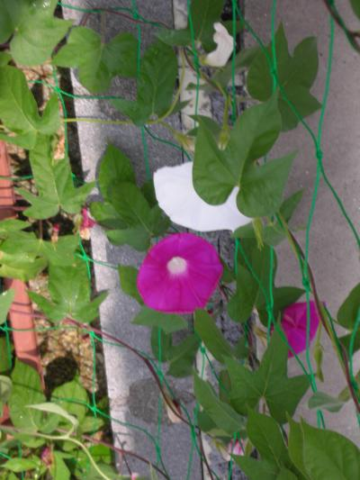 060_convert_20110704095559.jpg
