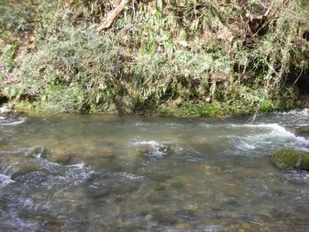 stream1