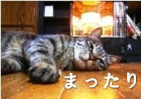 20110531_猫