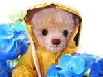 恵みの雨~