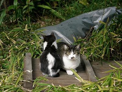 チビ黒白とママ2
