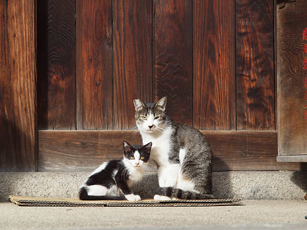 チビ黒白とママ