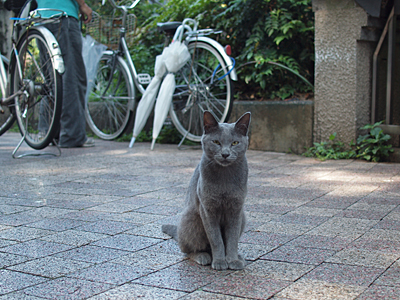 子ネコのチュータ
