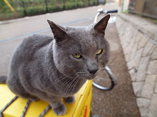 自転車とチュータ