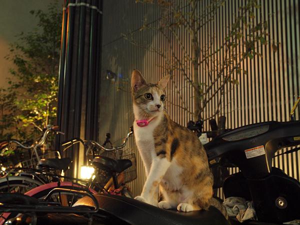 バイクに乗って~夏