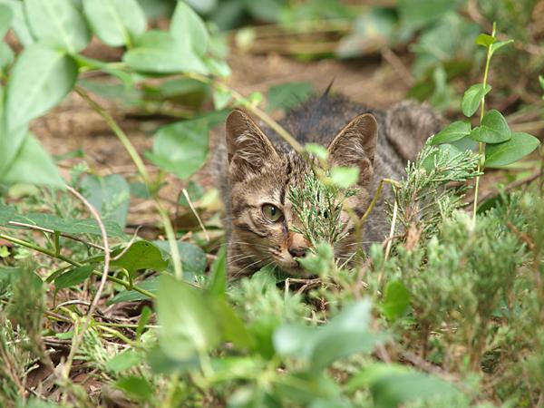 近所の子ネコちゃん4