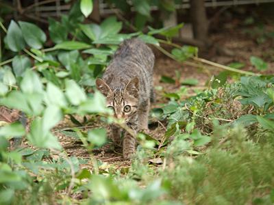 近所の子ネコちゃん3