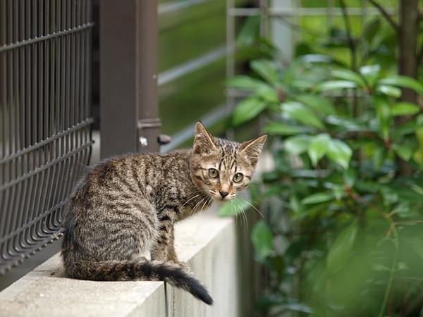 近所の子ネコちゃん2