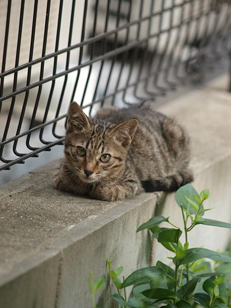 近所の子ネコちゃん1