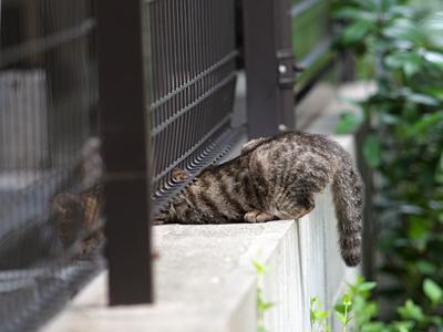 逃げる子ネコ