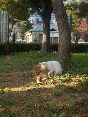 トラさんと白いネコ2