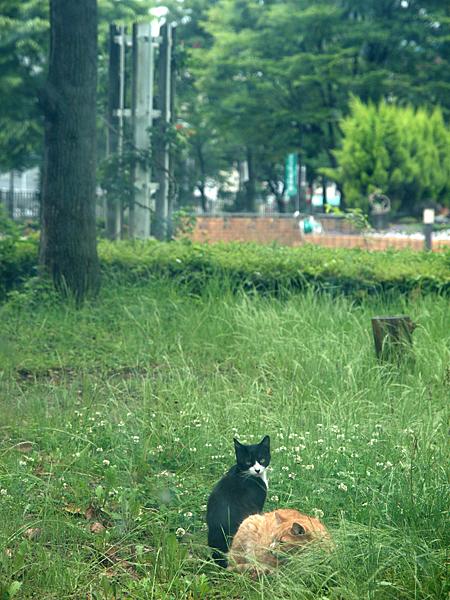 トラさんと黒白ネコ