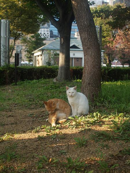 トラさんと白いネコ1