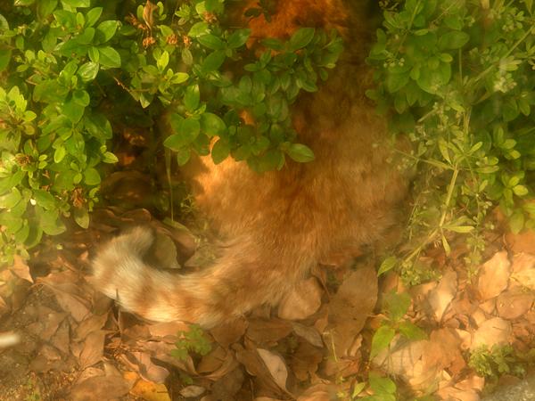 トラさんのしっぽ
