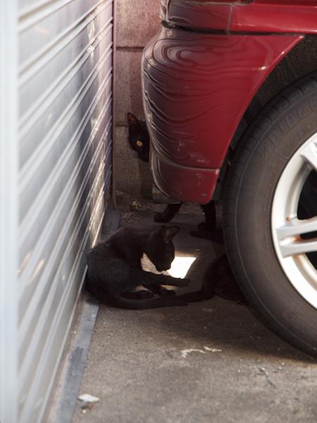 黒ネコ親子・自動車