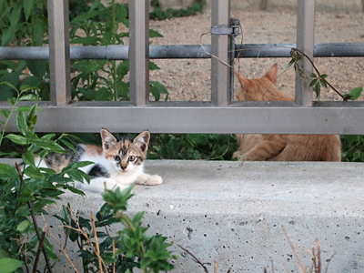 子ネコたち・公園2