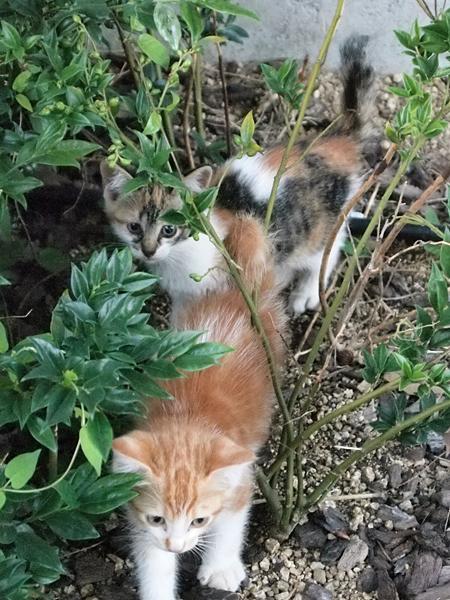 子ネコたち・公園5