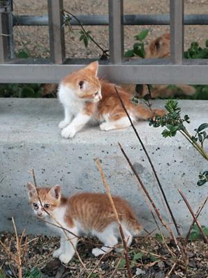 子ネコたち・公園4