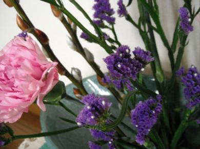 スターチス白い花